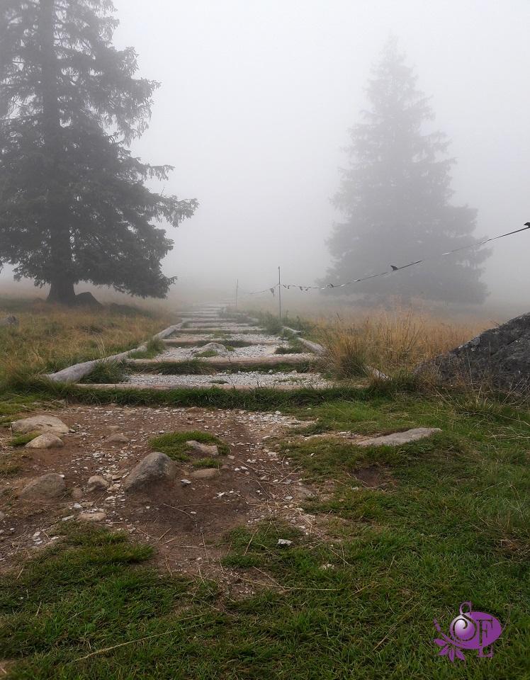 Mgła na Rusinowej Polanie